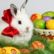 Happy Easter From AmeriPlan USA!